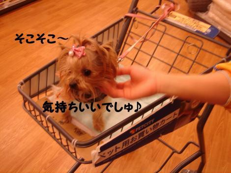 買い物11