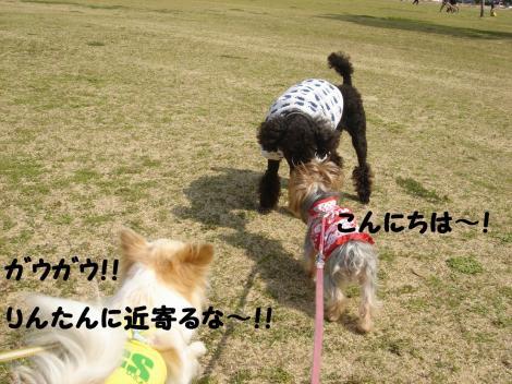 初散歩13