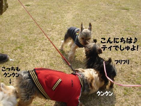 初散歩14