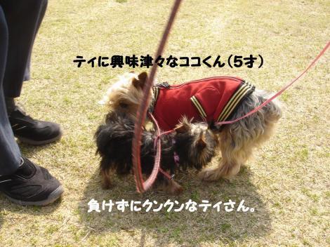 初散歩16
