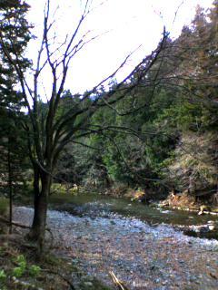 秋川渓谷9