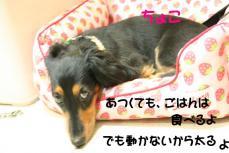 IMG_6914.jpg