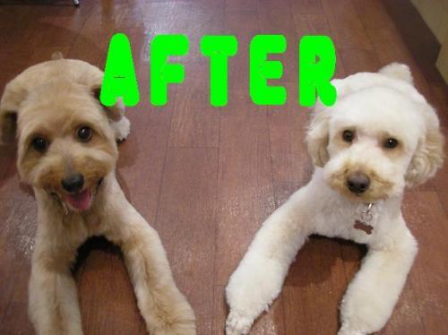 after.jpg