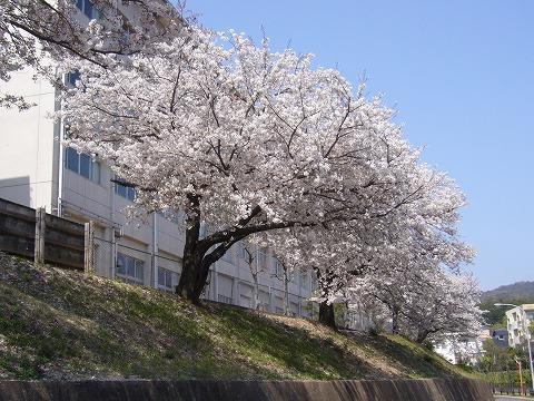 春の陽気。