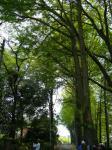 東叡山の並木