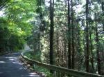 木陰の峠道