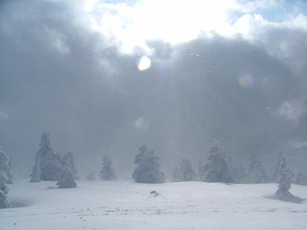 木が埋まる積雪