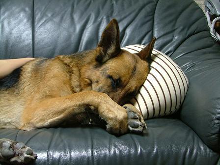 ソファーでくつろぐボン