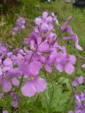 駐車場に咲く花