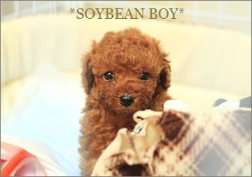 大豆少年ですよ。