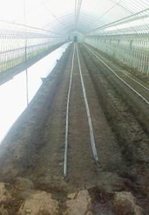 定植準備4トマト