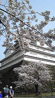 鶴ヶ城の桜1
