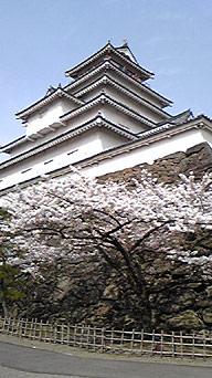 鶴ヶ城の桜2