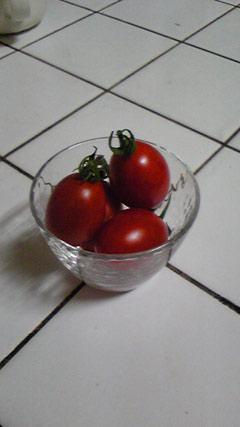 miniトマト