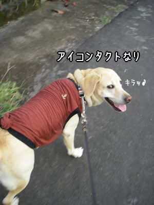 20080514-1.jpg