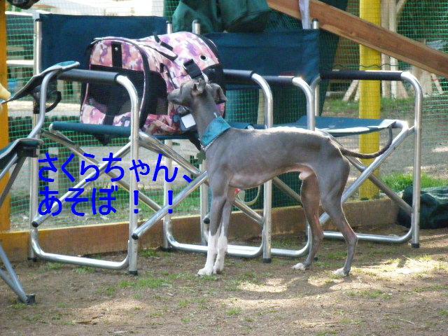 0322吉岡DR7