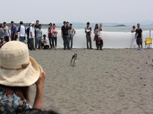 BLOG2008_0518海おさ26
