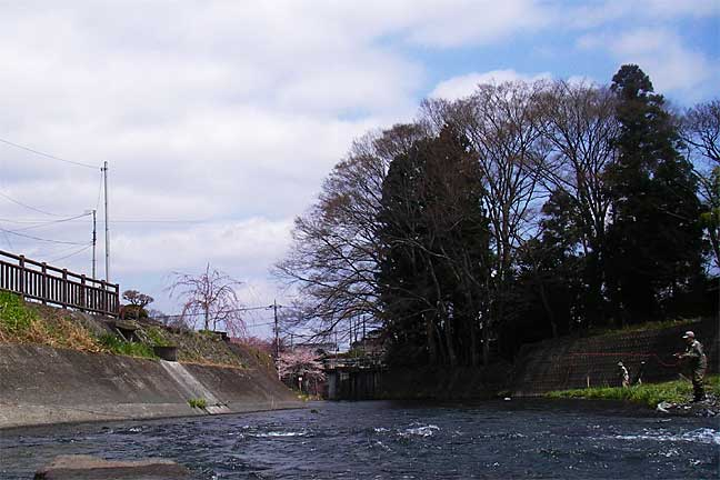 桂川有名プール下流側