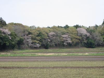 2008-4-12.jpg