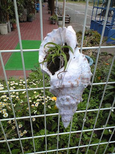 200805熱海貝殻2