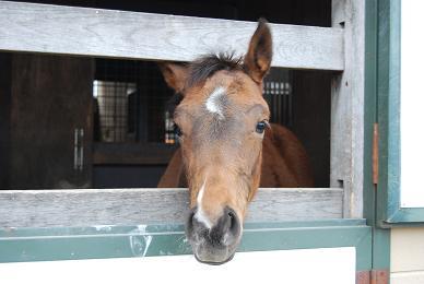 ジャンポケ08馬房
