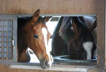 ディープ08・馬房1