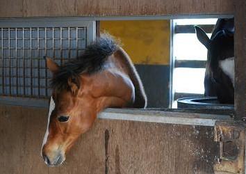 ディープ08・馬房2