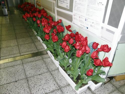 北綾瀬駅1