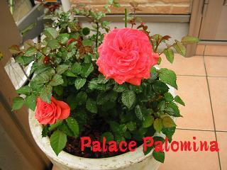 IMG_2177植物