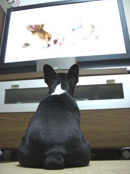 テレビ見すぎ!