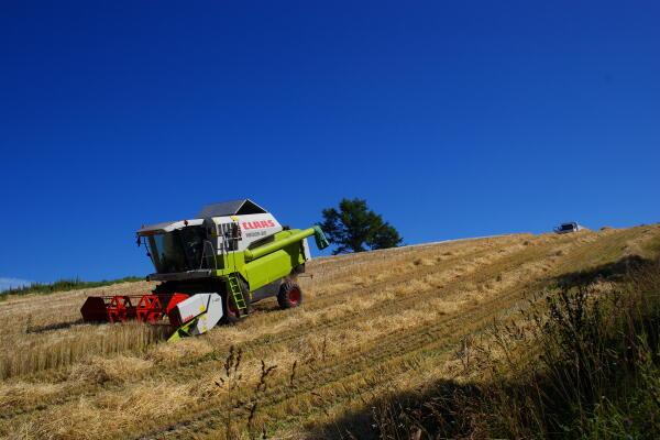 現代麦刈り風景