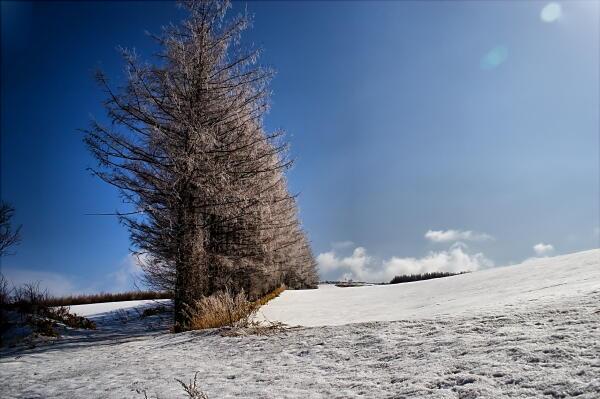凍てついた木