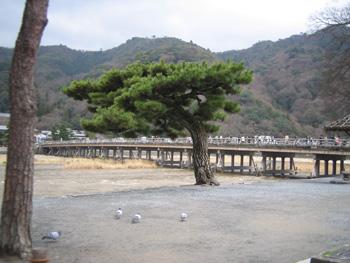 02arashiyama320.jpg