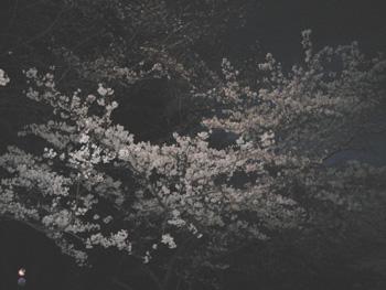 06sakursaakura.jpg