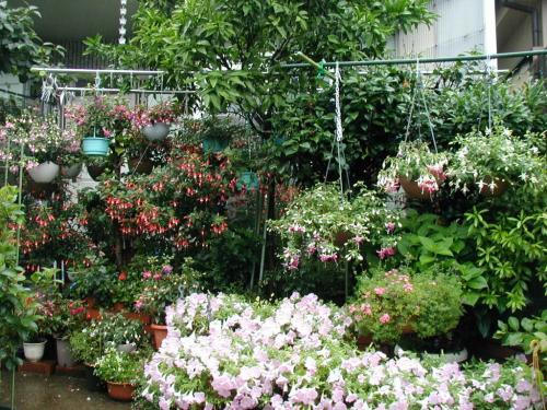 フーシャの有る庭