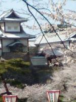 桜咲く金沢城