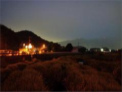 室見川上流~ホタル