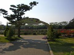 海の中道海浜公園~バラ園