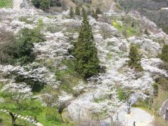 八木山展望公園