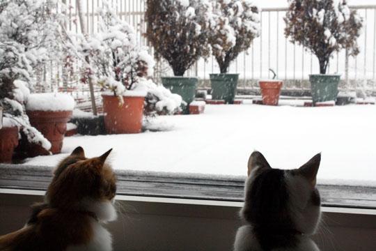 大雪になりそう1