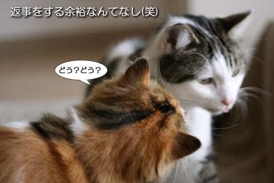 美味しいと猫も無口です6