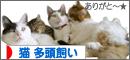 cat_tatou bana