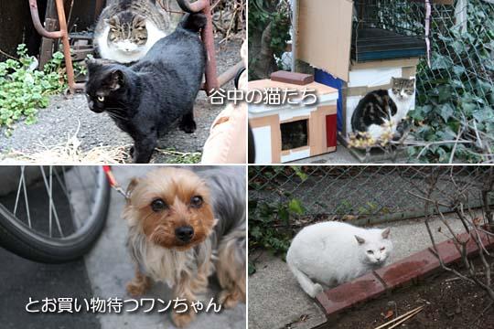 猫も犬もいっぱい9