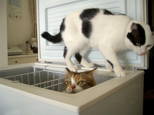 冷凍庫遊びも堪能2