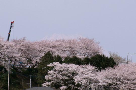 桜と富士山と…クレーン13