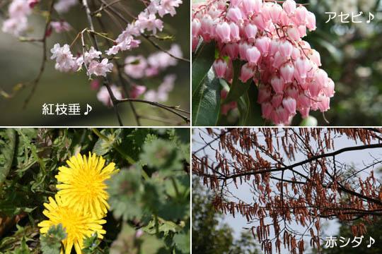 これもお花たち17