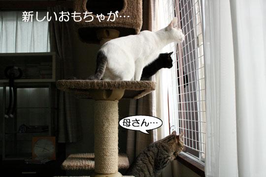 首ながニャンズ4