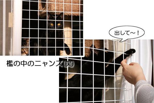 フクウタ動物園?5