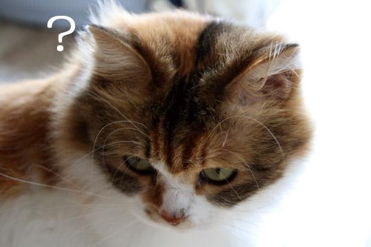 知らぬは本猫ばかりなり~8