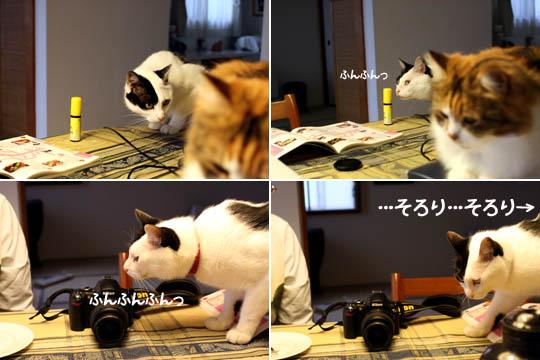 忍び寄る嗅ぎ魔(笑)4